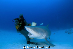 Playa del Carmen bull shark dive by Javier Sandoval 